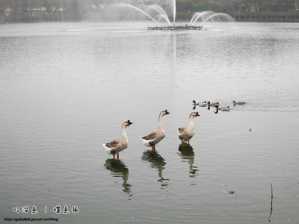 27-天鵝湖公園